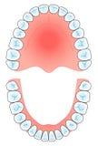 牙齿的曲拱 库存照片