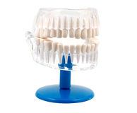牙齿设计 免版税库存图片