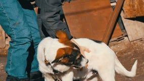 牛仔裤和夹克的男孩少年使用与在链子的一只小狗 影视素材