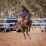牛仔骑马顽抗的马 库存照片