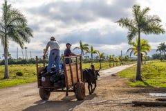黄牛在古巴人Pinar del RAoo乡下拉扯了推车 库存照片