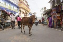 黄牛在市场 库存照片