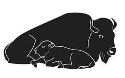 水牛城北美野牛母亲和婴孩 免版税图库摄影