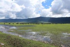 水牛城在坦桑尼亚 免版税图库摄影
