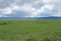 水牛城在坦桑尼亚 免版税库存照片
