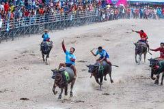 水牛城赛跑的节日在春武里市泰国 库存照片