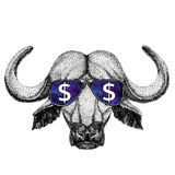 水牛城,公牛,与美元的符号例证的黄牛佩带的玻璃与T恤杉的,纹身花刺剪影,补丁野生动物 库存图片