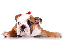 牛头犬英国小狗红色丝带佩带 免版税库存照片