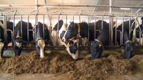 牛奶农场 股票录像