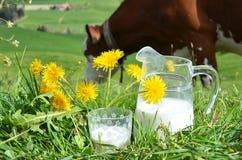 牛奶和母牛 免版税库存图片