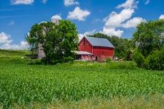 牛奶店和玉米农场,东明尼苏达 免版税库存图片