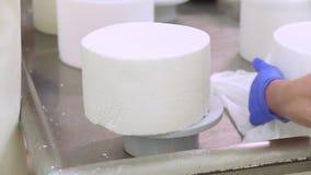 牛奶店工厂劳工,干酪制造过程,放乳酪凝乳入塑料模子 影视素材
