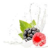 牛奶飞溅莓果 免版税库存图片