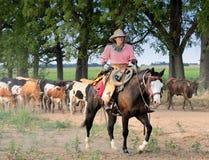 牛推进放牛者堪萨斯长角牛 免版税库存照片