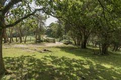 牛栅格和门新的森林汉普郡英国 库存照片