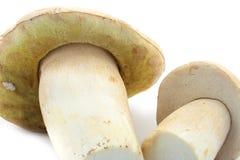 牛肝菌蕈类可食的蘑菇 库存照片