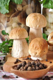 牛肝菌蕈类和香料 库存照片