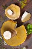 牛肝菌蕈类蘑菇 库存照片
