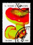 牛肝菌蕈类pinicola,蘑菇serie,大约1998年 免版税图库摄影