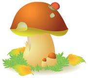 牛肝菌蕈类可食蘑菇 库存照片