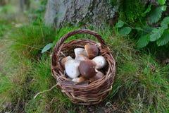 牛肝菌蕈类蘑菇在森林里 库存图片