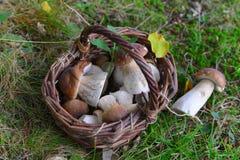 牛肝菌蕈类蘑菇在森林里 免版税库存图片
