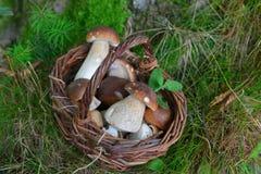 牛肝菌蕈类蘑菇在森林里 免版税库存照片