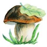牛肝菌蕈类蘑菇paited与水彩 图库摄影