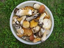 牛肝菌蕈类面包可食森林s灰鼠 仍然生活夏天 在碗的等概率圆 库存图片