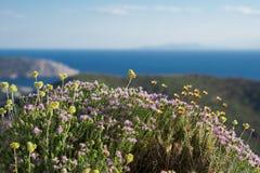牛至和野花在希腊的山 免版税库存照片