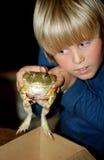 牛蛙 图库摄影