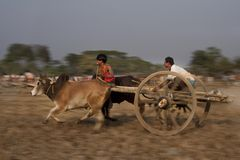 牛车种族 免版税库存图片