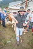 牛陈列和比赛在Brembana谷, Serina,贝加莫, Lombardia意大利 交配动物者优胜者 库存图片