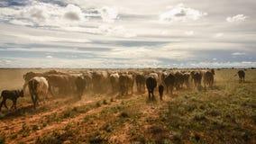 牛风景 免版税库存图片