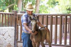 牛仔与一匹幼小马一起使用 免版税库存图片