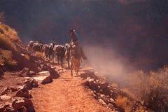 牛仔在大峡谷 图库摄影