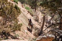 牛仔在布莱斯峡谷国家公园,犹他,美国 免版税图库摄影