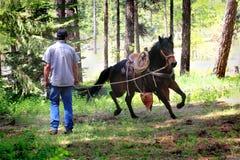 牛仔工作的连续马 免版税库存照片