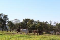 牛仔感人的牛 免版税图库摄影