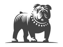 牛头犬在白色背景的传染媒介例证 皇族释放例证