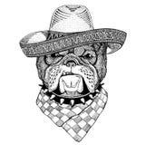 牛头犬野生动物佩带的阔边帽墨西哥节日墨西哥党例证狂放的西部 免版税图库摄影