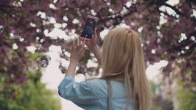 牛仔裤夹克的欧洲白肤金发的女孩在城市公园拍樱花照片  春天期间,进展 股票录像