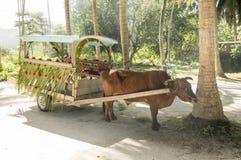 黄牛cartfor人运输在拉迪格岛海岛,塞舌尔群岛 库存照片