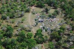 牛pantanal经营牧场 图库摄影