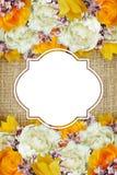 牡丹、郁金香、玫瑰和丁香花背景 免版税库存照片