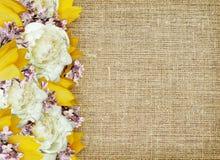 牡丹、郁金香和丁香花边缘 库存图片