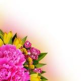 牡丹、郁金香和hawtorn花垄断安排 免版税图库摄影