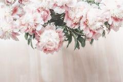 牡丹光彩的粉红彩笔花束顶视图在木地板背景的 库存图片