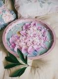 牡丹瓣在盘子的心脏形状 免版税库存照片