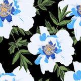 牡丹的暑假庭院精美蓝色白色样式开花 玫瑰,牡丹、银莲花属和玉树,多汁 皇族释放例证